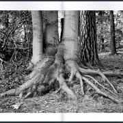 polysingularity-tree